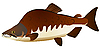 Vector clipart: pink salmon