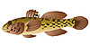 Vector clipart: goby fish