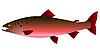Vector clipart: salmon