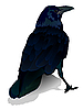 Vector clipart: crow