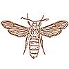 Векторный клипарт: жук