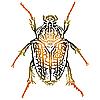 Векторный клипарт: Работа жук