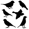 Vector clipart: Set of sparrows