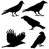 Set of crows
