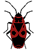 Vector clipart: Beetle soldier (pyrrhocoris apterus) on wh
