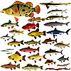 Collection of fish | Stock Vector Graphics