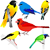 Vector clipart: Collection of birds
