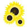 Vector clipart: Sunflower.