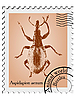 stamp with beetle