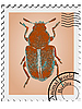 Stamp with beetle | Stock Vector Graphics