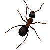 Vector clipart: an ant