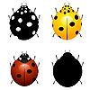 Vector clipart: Set ladybirds