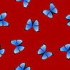 seamless texture with blue butterfly
