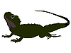 Векторный клипарт: Саламандра