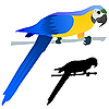 Vector clipart: drawing parrot