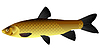 Vector clipart: s Chinese carp