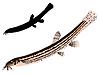 Vector clipart: s loach
