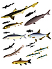 Vector clipart: collection of images of fish