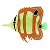 Vector clipart: butterfly fish