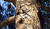 ID 3156158 | Lizard on tree | High resolution stock photo | CLIPARTO