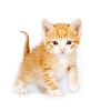 작은 빨간 호기심이 고양이 | Stock Foto