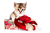 Multi-colored kitten in gift box | Stock Foto