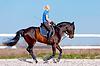 女骑士 | 免版税照片