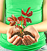 ID 3162638   Woman holding seedling grown from soil in her hands   High resolution stock photo   CLIPARTO