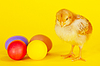 Small chicken staying with colorful Easter eggs | Stock Foto