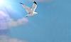Sun Bird | Stock Foto