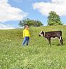 Child and calf | Stock Foto