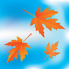 Vector clipart: falling leaves on sky background
