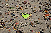 A broken coffee cup on the beach | Stock Foto