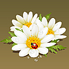 Vector clipart: Camomile floral ornament. Flowers fresh background.