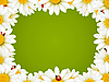 Vector clipart: Camomile Floral Frame