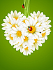 Vector clipart: Floral love card (camomile heart)