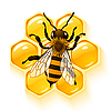 Vector clipart: bee and honeycombs