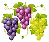 Vector clipart: Three cluster of grapes