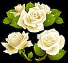 Vector clipart: White roses set