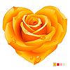 Orange rose in the shape of heart