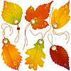 Vector clipart: Autumnal discounts. Fall leaves