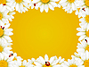 Vector clipart: camomile frame and ladybugs