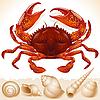 Red crab and few seashells