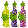Vector clipart: Vine grape bottles