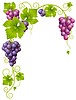 Vector clipart: grape frame