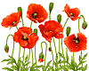 Vector clipart: Spring flowers: poppy