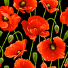 Seamless background of poppies