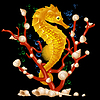 Vector clipart: Sea horse