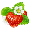 Vector clipart: strawberry in the shape of heart and white flower
