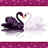 Vector clipart: Two graceful swans in love